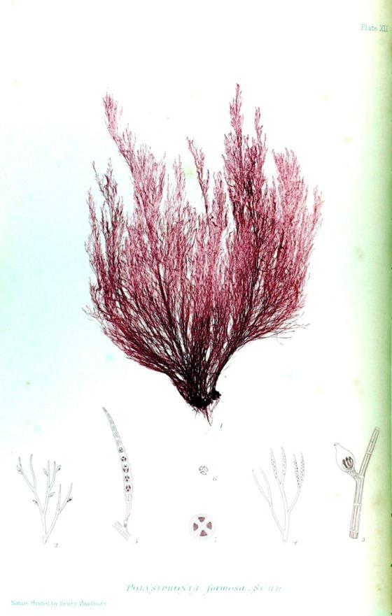 british-sea-weed-6